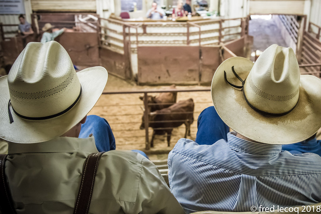 livestock auction in Amarillo Texas